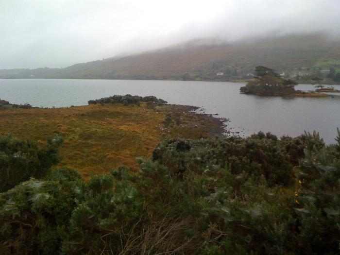 Mustard-colored moss and dew-dappled cobwebs, near Connemara, Ireland 2009