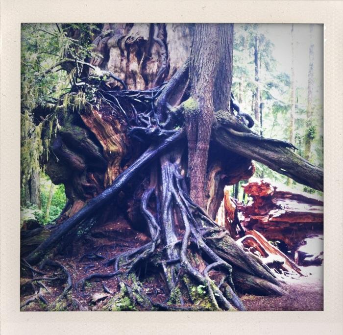 Trees along the beach, Washington coast