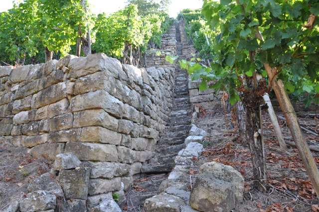 Climbing the ancient steps above the vineyards, on the lookout for geckos and nettles