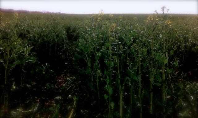 Through the fields in Besigheim
