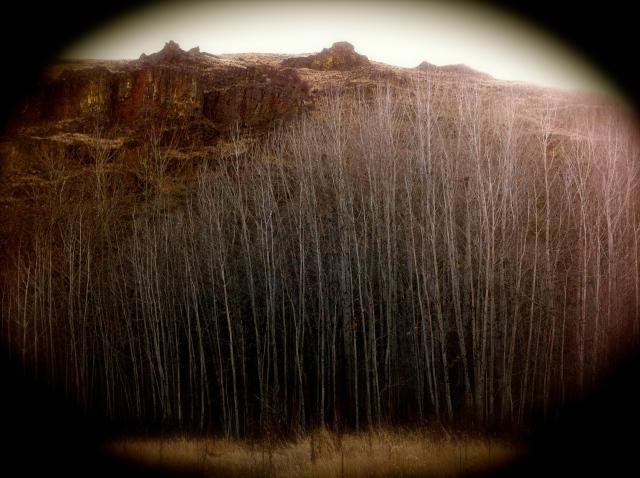 Umtanum Canyon, eastern Washington