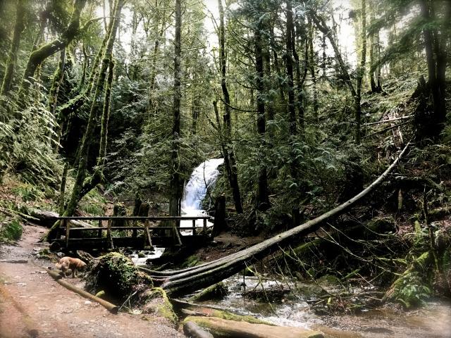 Coal Creek Falls, Cougar Mountain (Issaquah)